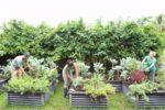 Alamein Community Garden